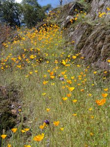 Wildflower Walks at Bridgeport