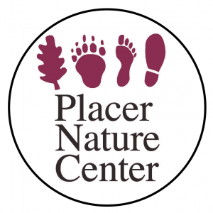 Placer Nature Center's Summer Camp