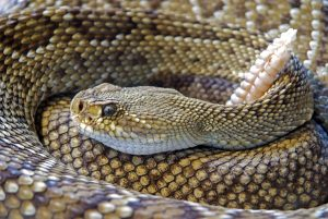 Annual Rattlesnake Avoidance Clinic at Western Gateway Dog Park in Penn Valley, CA